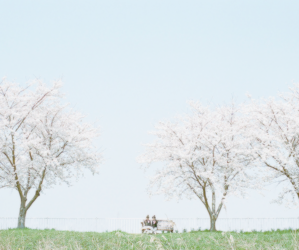 blue, cherry blossoms, and photography image