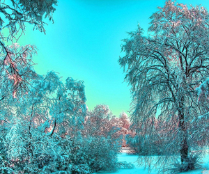 winter, blue, and nature image