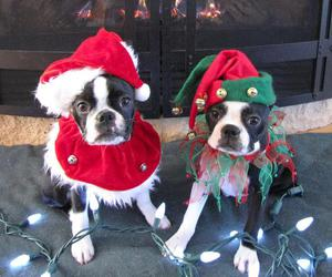 christmas and puppies image