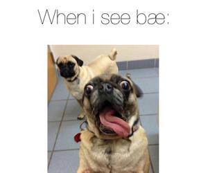 bae, dog, and love image