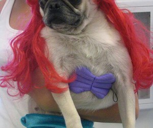 dog, ariel, and pug image