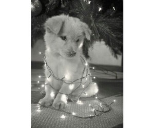 christmas, puppy, and little image