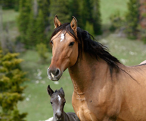 beautiful, horse, and mare image