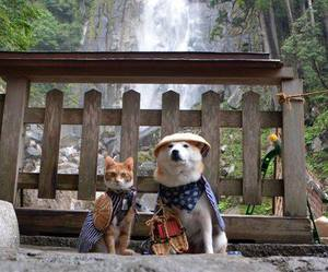 cat, dog, and japan image
