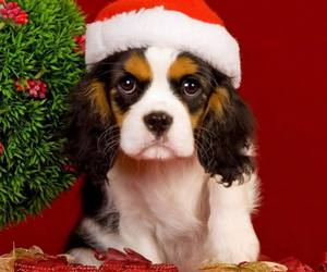 baby animals, cats, and christmas image