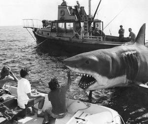 shark and spilberg image