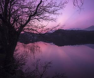 lake, tree, and water image
