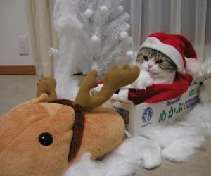 cat, funny, and santa image