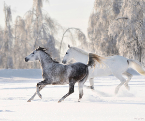 horse, winter, and white image