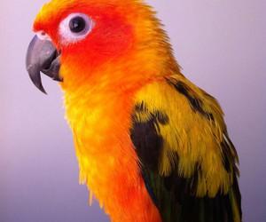 animals, birds, and sun conure image