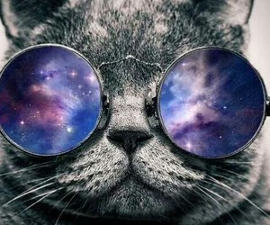 cat and cat wearing glasses image