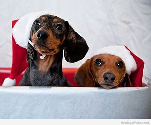 christmas, dogs, and puppy image