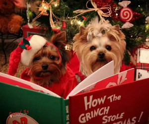 book, lovely, and christmas image