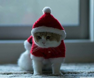 cat, cute, and christmas image