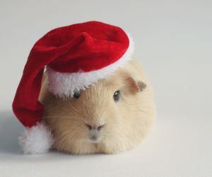 christmas, cute, and animal image