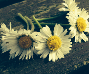 daisy, green, and spring image