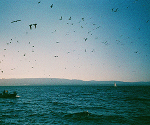 sea, bird, and vintage image