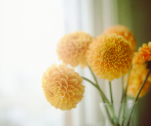 fall, flowers, and yellow image