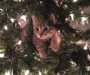 animals, cat, and merry christmas image