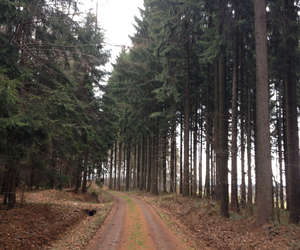 forest, mystery, and nature image