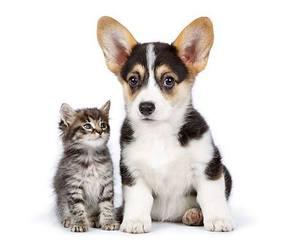 cats, corgi, and cute animals image