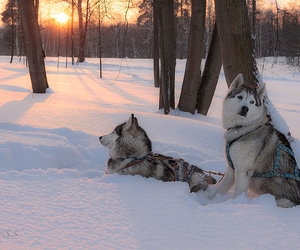animals, dogs, and nature image