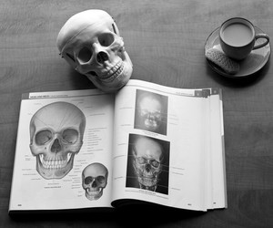 anatomy, book, and love image