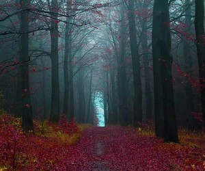 forest, tree, and germany image