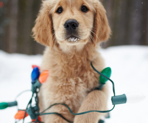 dog, christmas, and snow image