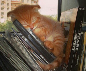 adorable, kitten, and books image