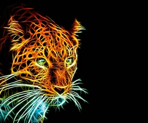 lights, neon, and tiger image
