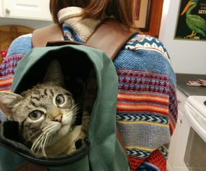 cat, bag, and backpack image