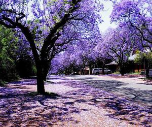 tree, purple, and flowers image
