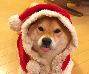 christmas, dog, and akita inu image