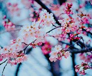80 Images About Flowers On We Heart It See More About Flowers