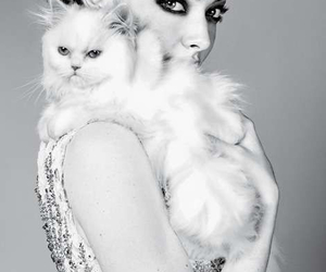 cat, amanda seyfried, and Elle image