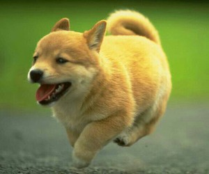 dog, fast, and cute image