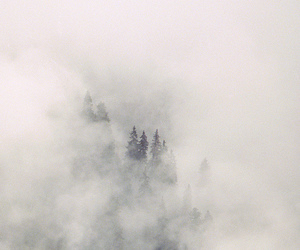 fog, life, and nature image