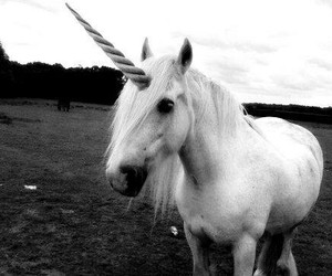 unicorn, black and white, and horse image