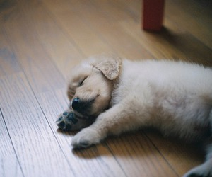 adorable, doggy, and home image
