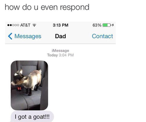 goat, funny, and dad image