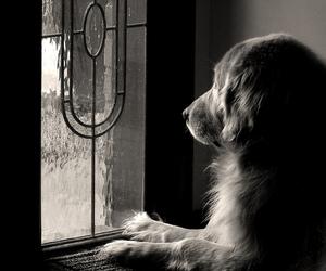 dog, waiting, and window image