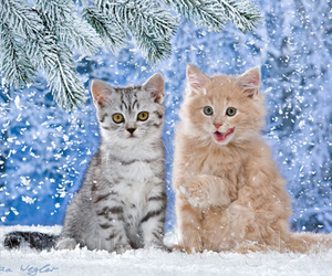 cats, christmas, and kittens image