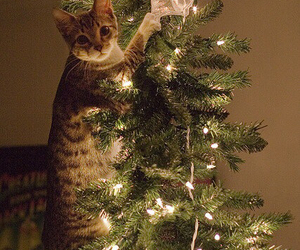 cat, christmas tree, and helper image