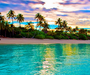 gorgeous, ocean, and palm trees image