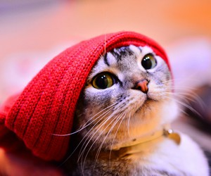 cat, animals, and red image