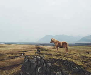 horse, mountains, and yome image