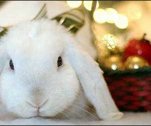 adorable, rabbit, and animals image