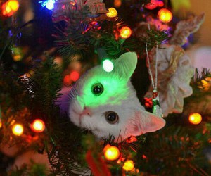 cat, christmas tree, and christmas image