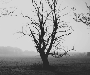 alone, silence, and tree image